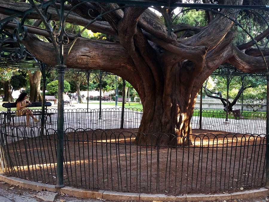 Weetjes flora | Saudades de Portugal