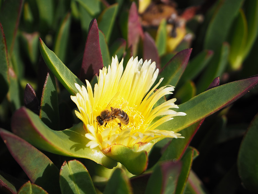 Portugese Weetjes: Flora
