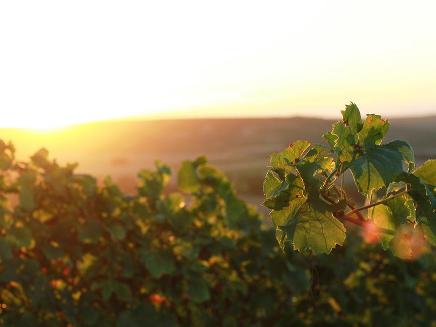 Rota dos Vinhos do Alentejo