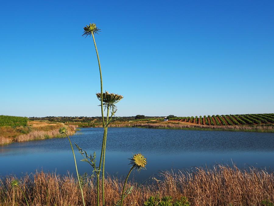 Alentejo op zijn mooist | Saudades de Portugal