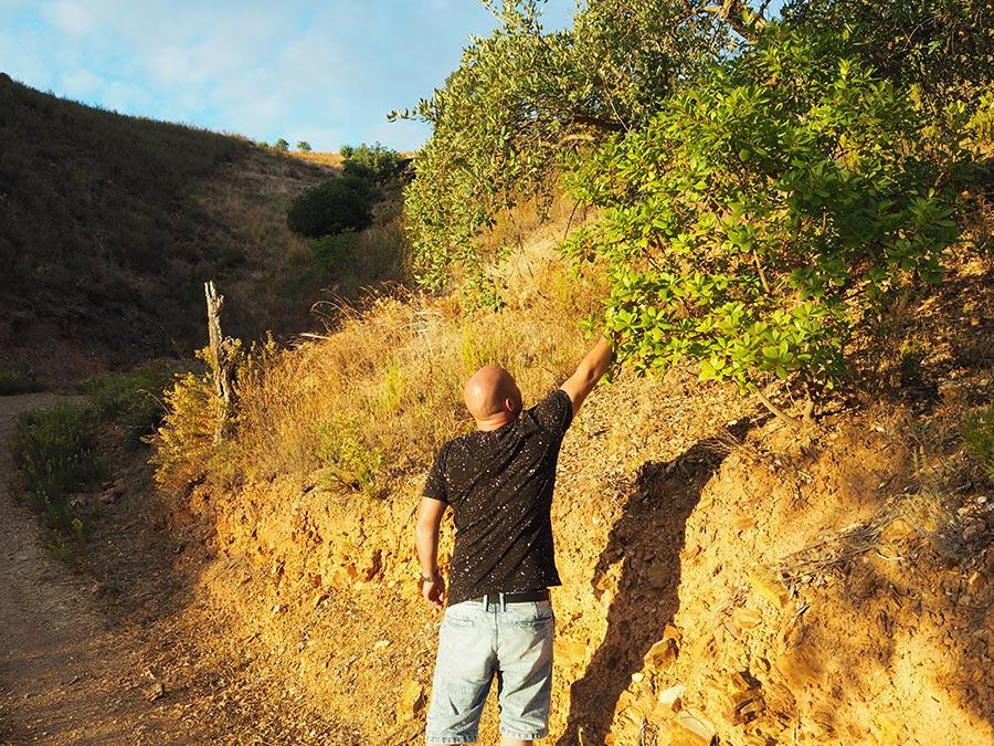 Planten en Kruiden Algarve | Saudades de Portugal