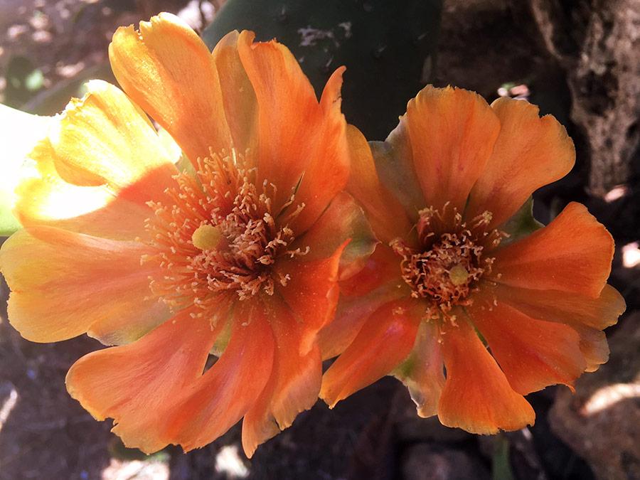 Vanaf het Dakterras: Bloemenpracht