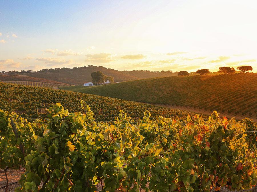 Wijntoerisme in Portugal