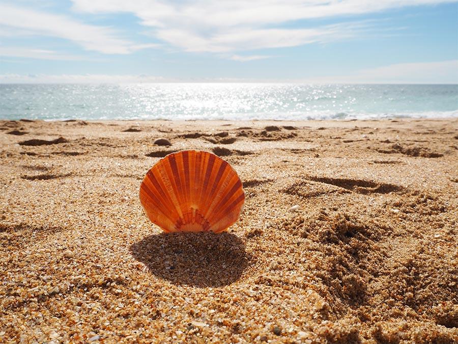 Taste of Portugal: Beaches