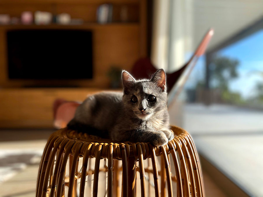 Dierenliefde op Madeira
